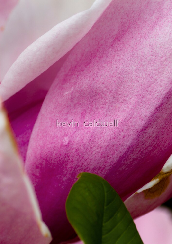 soft by kevin  caldwell