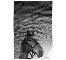 """Emilys' Horse"" Poster"