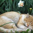 Sweet spring dreams by Maria1606