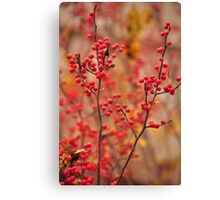 Winterberry Holly - Ilex verticillata Canvas Print