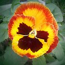 Smiling floweret by Ana Belaj