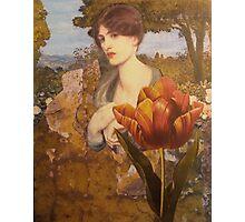 Tulip Photographic Print