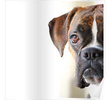 boxer portrait Poster