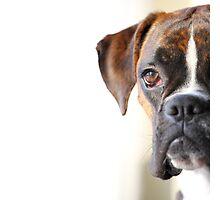 boxer portrait Photographic Print