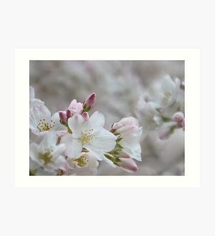 The Glory of Spring 2 Art Print