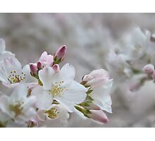 The Glory of Spring 2 Photographic Print