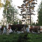 Cow Still Life by ArtOfE