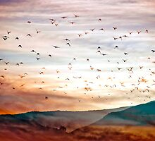 Flight of One Thousand Birds by Mark Wade