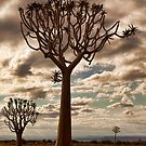 Quiver Trees by Jill Fisher