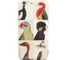 Australian birds iPhone Case/Skin