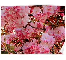 Cherry Blossoms - 2 Poster
