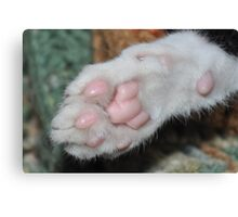 Kittens paw . Canvas Print
