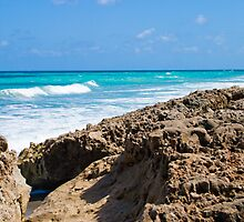 Rocky Beach Blowing Rock Preserve Florida by Henry Plumley