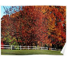 Autumn's explosion of color Poster