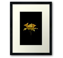 Elegant Daffodils Framed Print