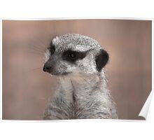 Meerkat on the Lookout Poster
