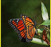 Monarch Butterfly by George  Link