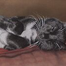 Cat Napping by Pam Humbargar
