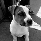 Puppy Eye by snhood