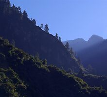 Pines in the Morning Light near Dharapani by SerenaB