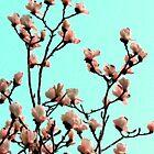 spring sense by Danit Elgev