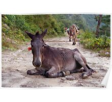 Resting Mule on the Path Poster