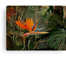 Bird of Paradise Flower - Crane Lily - Strelitzia reginae Canvas Print