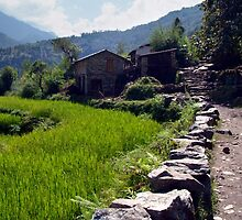 Rice Fields by the Path to Ghorepani by SerenaB