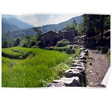 Rice Fields by the Path to Ghorepani Poster