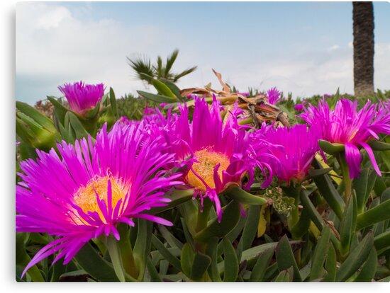 Purple Flowers by tkubiena