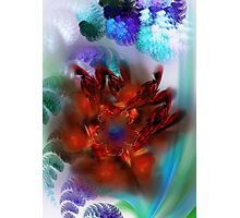 bouquet of purple and red flower Photographic Print
