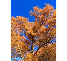 Perfect Fall Day  Photographic Print