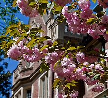 USA. Philadelphia. University of Pennsylvania. Spring. by vadim19