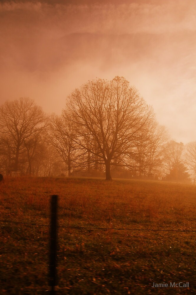orange fog by Jamie McCall