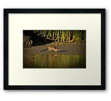 Australian Water Rat Framed Print