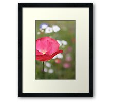 Pink Poppy Close Up Framed Print