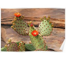 Prickly Pear Cactus Poster