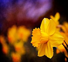 Daffodils at Dusk by Lynnette Peizer