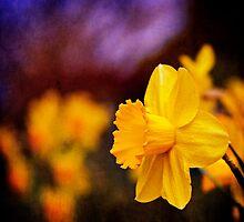Daffodils at Dusk by Lynnette Peizer