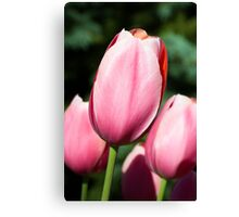 Pink Tulips with Whtie and Salmon Accents Canvas Print