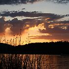 Whitefish Reeds by snhood