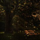 Fireflies by jules572