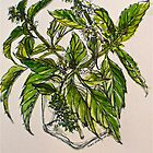 Basil. A pungent and delicious herb. Pen & wash. 21cmx28cm 2012Ⓒ by Elizabeth Moore Golding