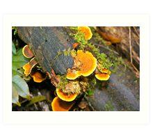 Australia, Victoria, Otway Ranges, rainforest 2 Art Print