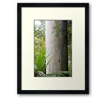Australia, Victoria, Otway Ranges, rainforest 5, Framed Print