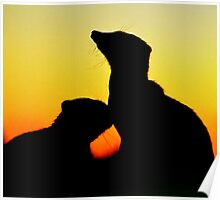Meer Cats silhouette Poster