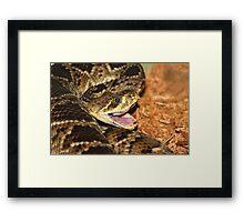 Rattle Snake Framed Print