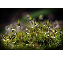 The Magic and Mystery of Microscopic Moss Photographic Print