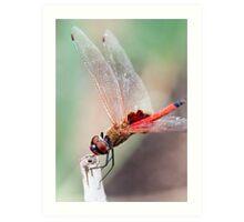 Dragonfly 3 Art Print