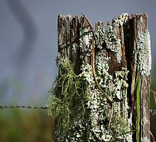 There's life in the old post yet! by Clare Colins